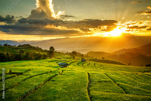 Couple cottages on green rice field at sunset in pa bong piang Chiangmai