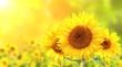 Quadro Sunflowers on blurred sunny background