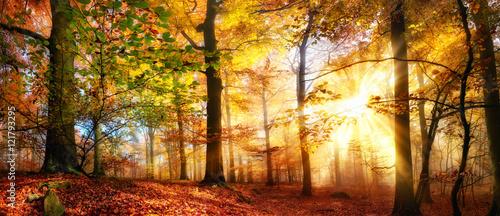 Papiers peints Orange eclat Sonne scheint in einem bunten Wald im Herbst bei Nebel