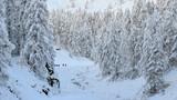 Scialpinismo nel bosco innevato