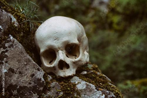Poster Cráneo humano sobre una roca en la naturaleza