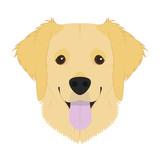 Golden Retriever dog isolated on white background vector illustration