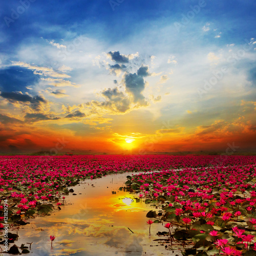 Foto op Canvas Zen Sunshine rising lotus flower in Thailand