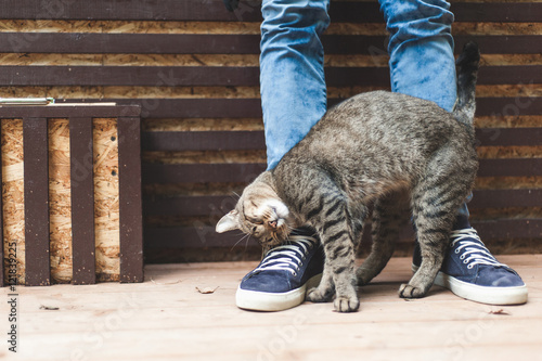 Striped gray cat caressing at male legs - 121839225
