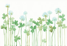 "Постер, картина, фотообои ""Watercolor illustration of white clover."""