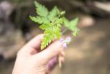 Mnao di una donna tiene tra le mani una piccola pianta verde e un germoglio non ancora fiorito