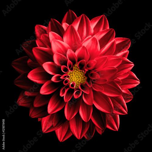 Plakat Surreal dark chrome red flower dahlia macro isolated on black