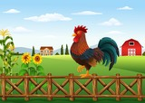 Cute cartoon rooster standing in the farm fence