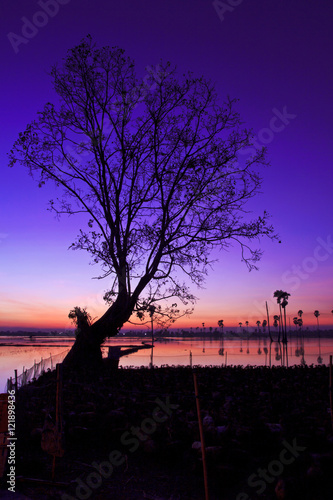 Foto op Canvas Violet Silhouette twilight sunset sky reflect on the water with palm tree landscape