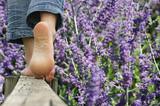 marche pieds nus - lavande