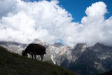 Alpine Cow in silhouette