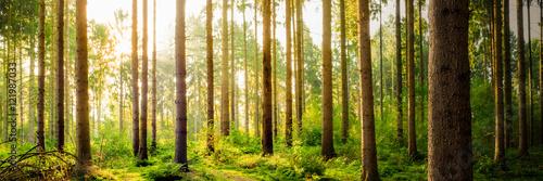 idylliczny-las-przy-wschodem-slonca