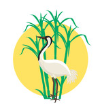 Crane Bird in Field Vector