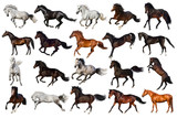 Horse collection isolated on white background - 122035009