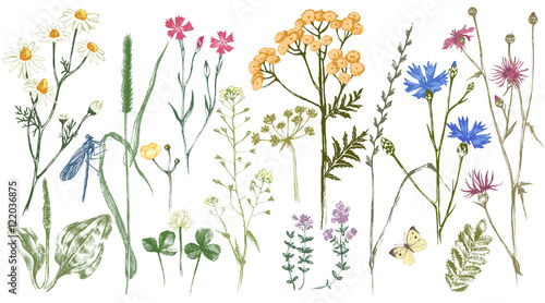 Hand drawn set with herbs and flowers