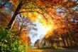 Park im Herbst, mit Sonne und gold beschienenem Laub am Baum