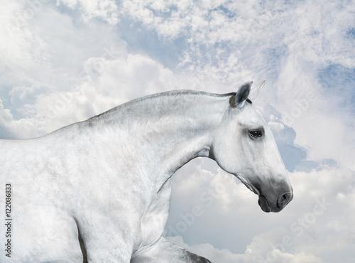 White Horse portrait run on sky background - 122086833