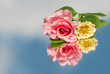 Delicate pink rose and a pale yellow Zinnia with a reflection - with copy space