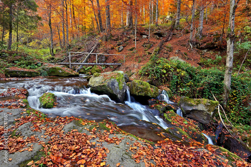 Autumn scenery in the forest