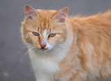 Stray red cat on the road. Selected focus with depth of field.