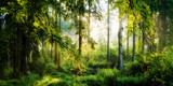 Wschód słońca w lesie jesienią, marzycielski scena rano