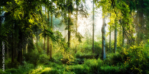 Sonnenaufgang im herbstlichen Wald, verträumte Szene in den Morgenstunden