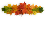 Fototapety Autumn maple leaves that vignette, green, yellow, orange, and red. Room for copy space!