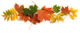Fototapety Collection of colorful Autumn leaves with room for copy space.