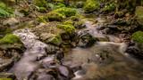 Fototapety Gentle Creek in a Forest