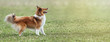 Website banner of a beautiful young dog
