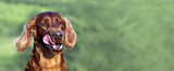 Website banner of a funny hungry dog as licking his mouth