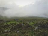 verde nebbia