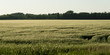 Crop in a field, Wilkes South, Winnipeg, Manitoba, Canada