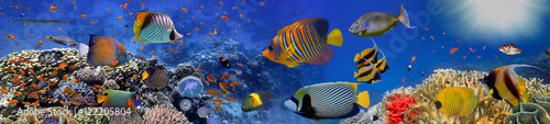 Sea corals. Panorama © vlad61_61