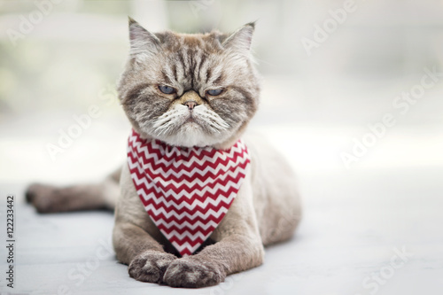 Angry looking cat - 122233442