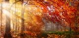 Herbst im Wald, mit Lichtstrahlen im Nebel und rotem Laub - 122248477