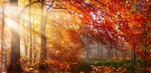 Herbst im Wald, mit Lichtstrahlen im Nebel und rotem Laub Poster