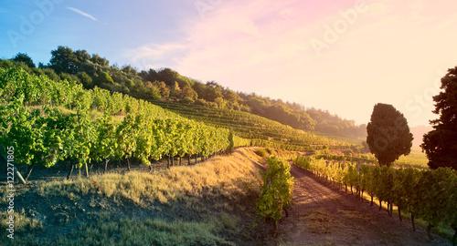 Foto op Aluminium Wijngaard Lumière dans les vignes en France