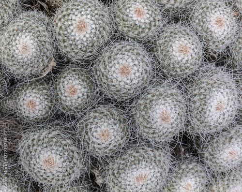 Foto op Canvas Cactus Outdoor cactuses background.
