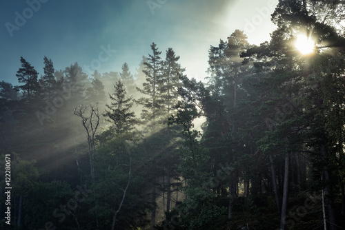 Crepuscular Rays in the Forest III - 122280671