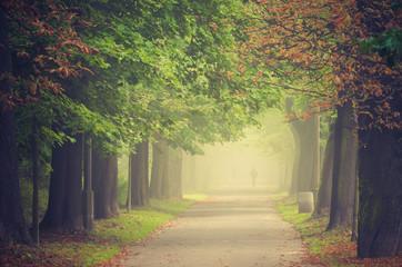 Autumn tree alley in the fog, Krakow, Poland