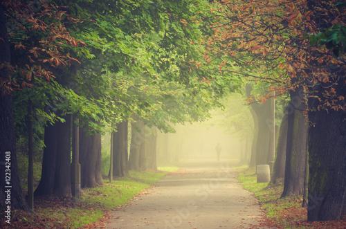 Jesieni drzewna aleja w mgle, Krakow, Polska