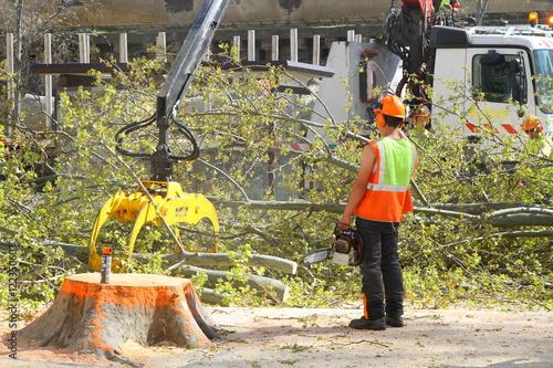 Billede Ramassage branches d'arbre