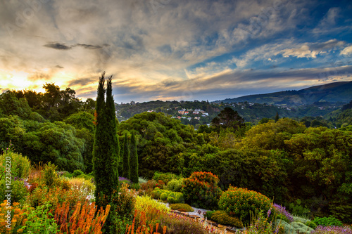 Sunset in botanic garden Poster