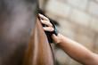 Nahaufnahme, Frau striegelt ihr braunes Pferd - 122373648