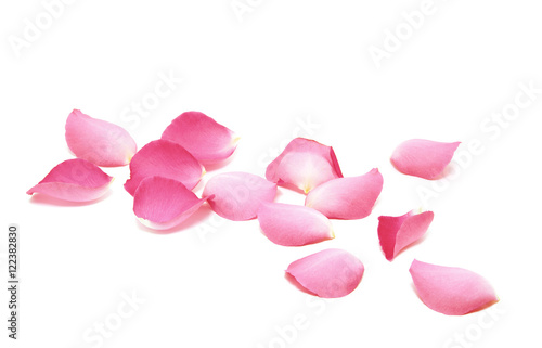 Fototapeta Petals of roses on a white background