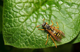 From above view of wasp on leaf