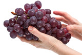 Brush of red grapes in the hand