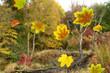 Herbst 156