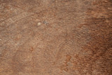 brown old wood texture